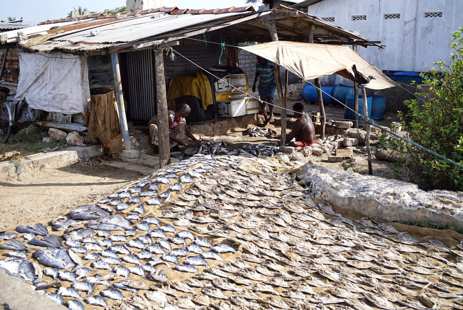 Those who have finished shopping on the market go a little farther where on the jute string mats fishes dry in the sun.