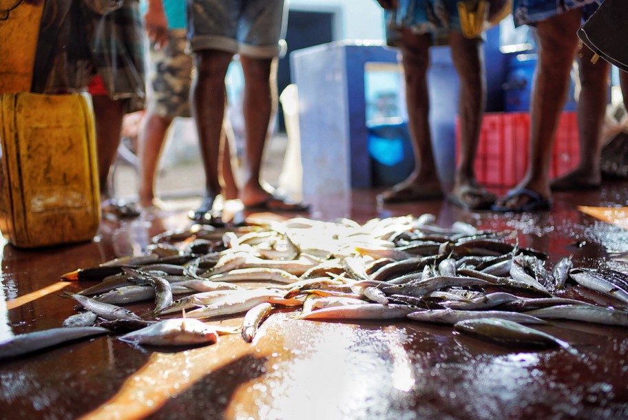 When the seafood touches the floor, the auctioneers shout out its price in a loud, booming voice.
