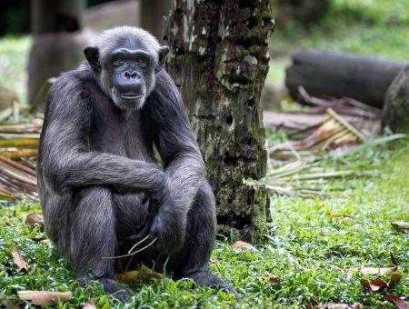Eye to eye with wildlife in Singapore Zoo