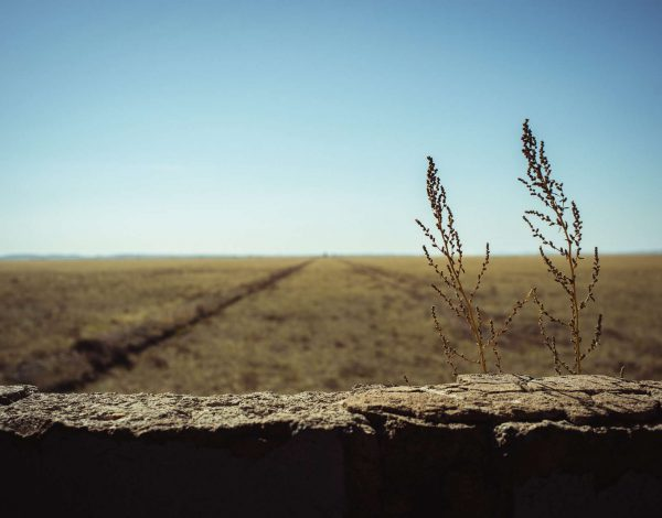 Under the dressing of the golden steppe